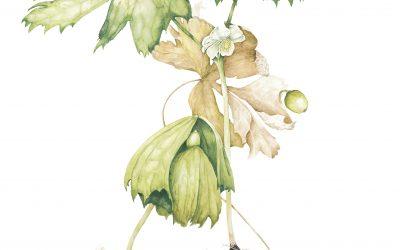 Contemporary Botanicals